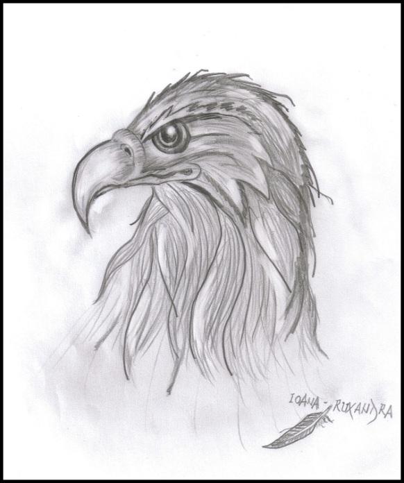 vultur 01.jpg
